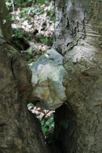 Cheile Nerei - un copac iubea o piatra