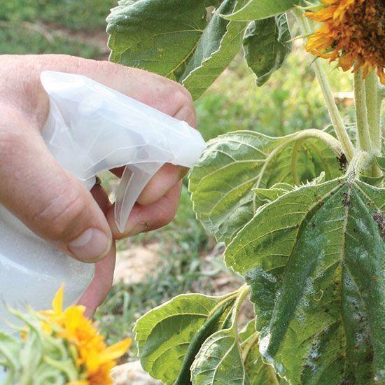 Profită de timpul petrecut acasă!  Inspiră-te pentru amenajarea grădinii – trei trenduri care te vor încânta
